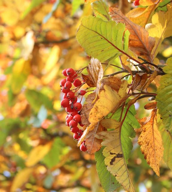 berries fruit Autumn fall