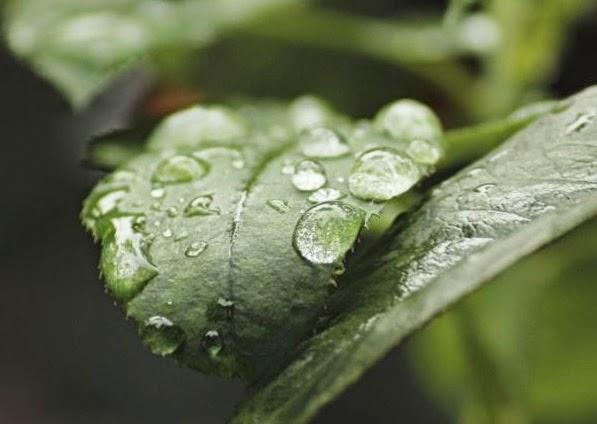 Тази година месец май ще ни донесе малко по-ниски температури от обичайните и малко повече валежи