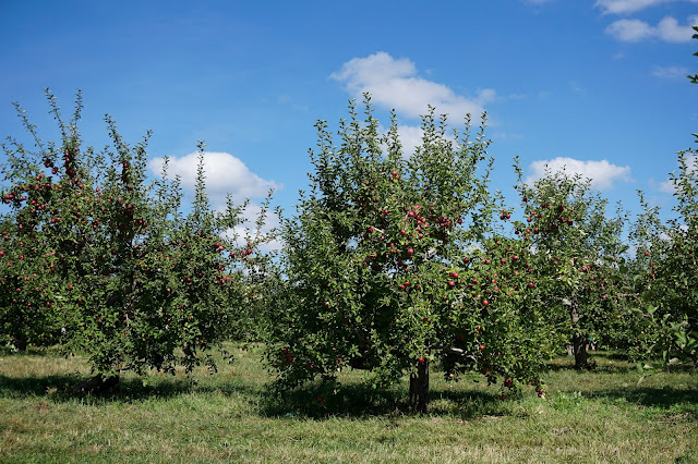 Brookfield-Orchards-Massachusetts-Travel The East