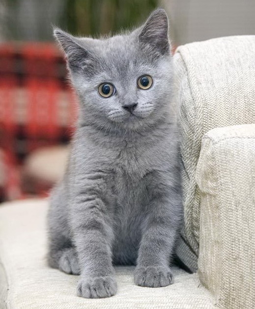 imagini cu pisici