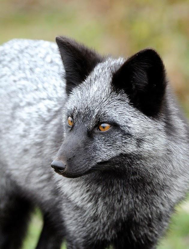 heartwarming photos of foxes, fox pictures