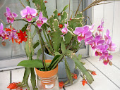 My Orchid!