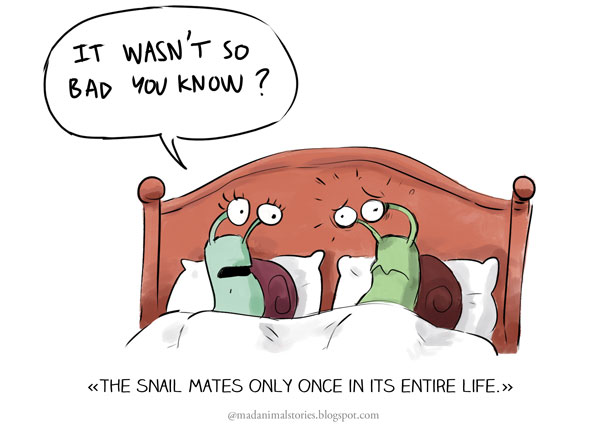 the snail mates only once in its entire life