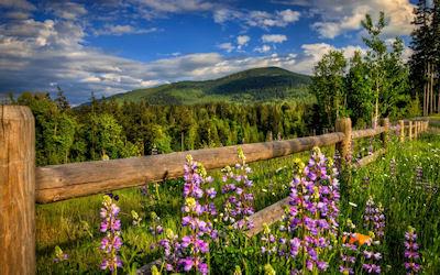 Paisaje con flores en las altas montañas naturales - Landscape