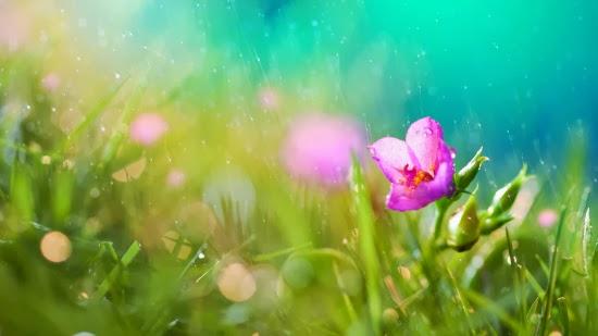 http://maghd.blogspot.com/2012/10/flower-in-rain.html