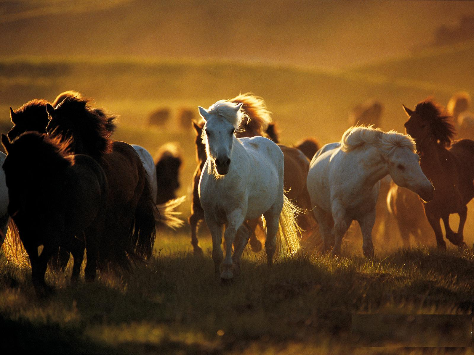 Most Inspiring   Wallpaper Horse Desert - wild+horses+wallpapers  Snapshot_806913.JPG