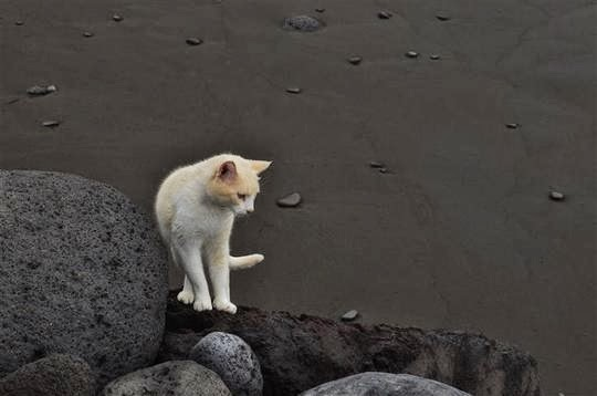 cats of tenerife