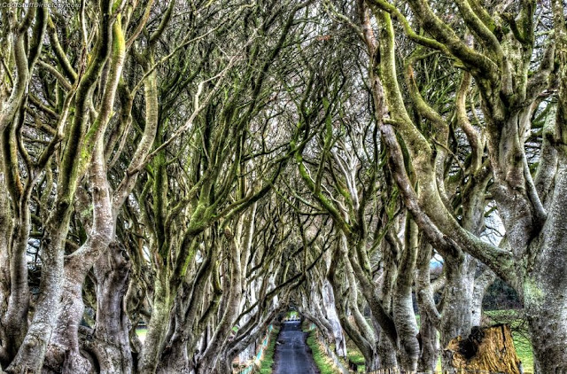 18. Another view of the dark hedges in Antrim by Jase Wickham