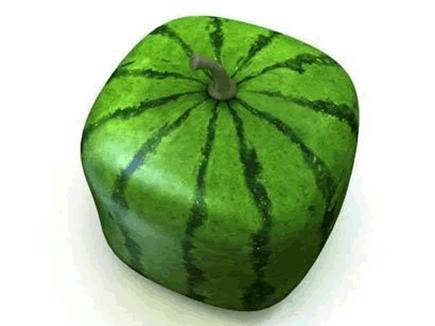 قال البطيخ مدور