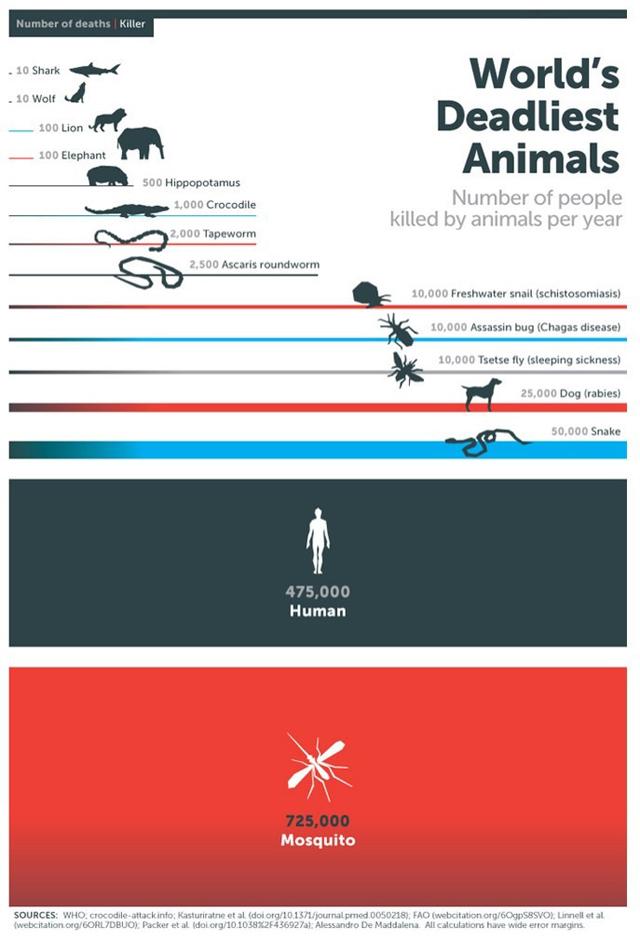 muertes, mosquitos, seres humanos,