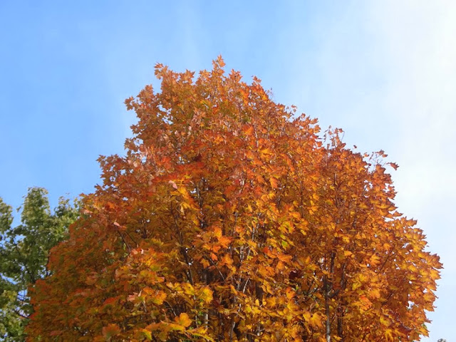 Sunny Vancouver fall day, orange foliage
