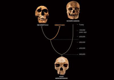 Denisova human