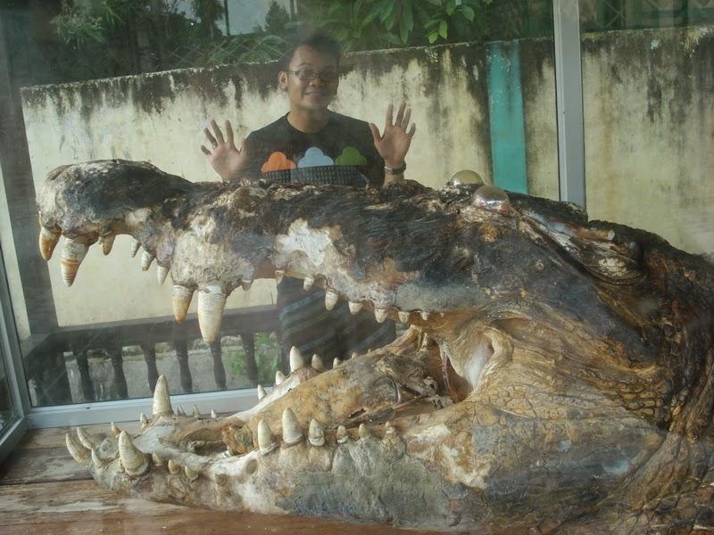 gambar buaya terbesar di dunia budak jumpa ular terbesar di dunia 3 ...