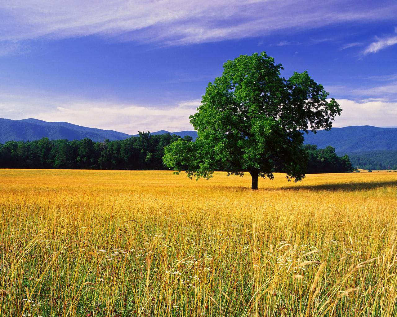 http://2.bp.blogspot.com/-o6-aHsYA94w/Tey-dK8sCYI/AAAAAAAAAQc/CAUP8_67p18/s1600/1280_1024_nature_wallpaper_106320843.jpg
