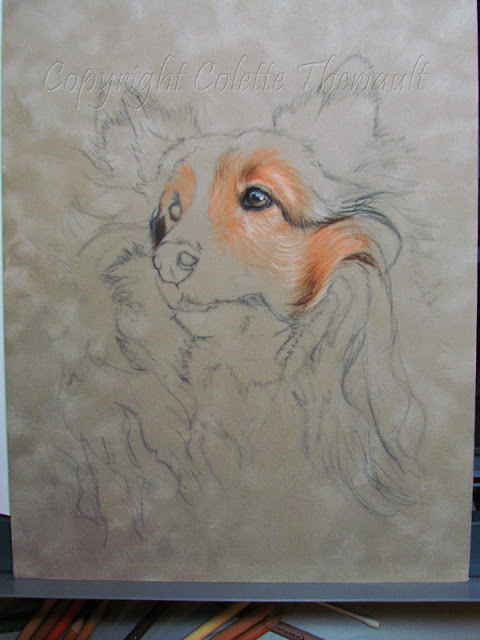 sheltie dog portrait painting progress by Colette Theriault