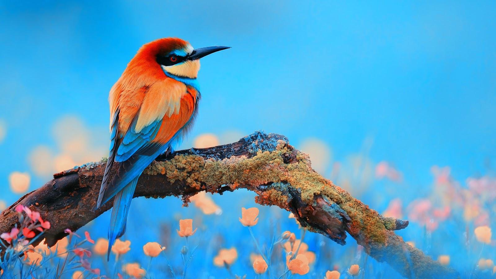 Banco de imgenes Paisajes Flores y Aves de nuestra naturaleza