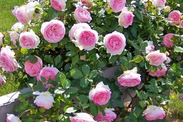 Фото корзин с цветами, красивые картинки композиций из букетов 71