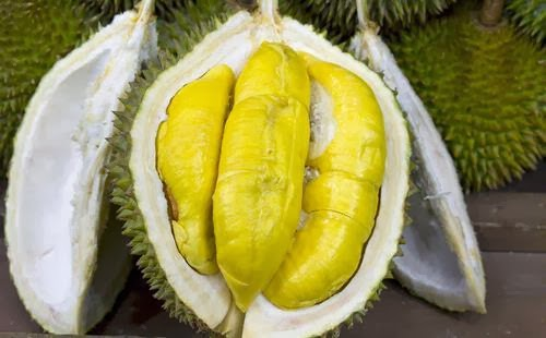 Hasil gambar untuk durian medan