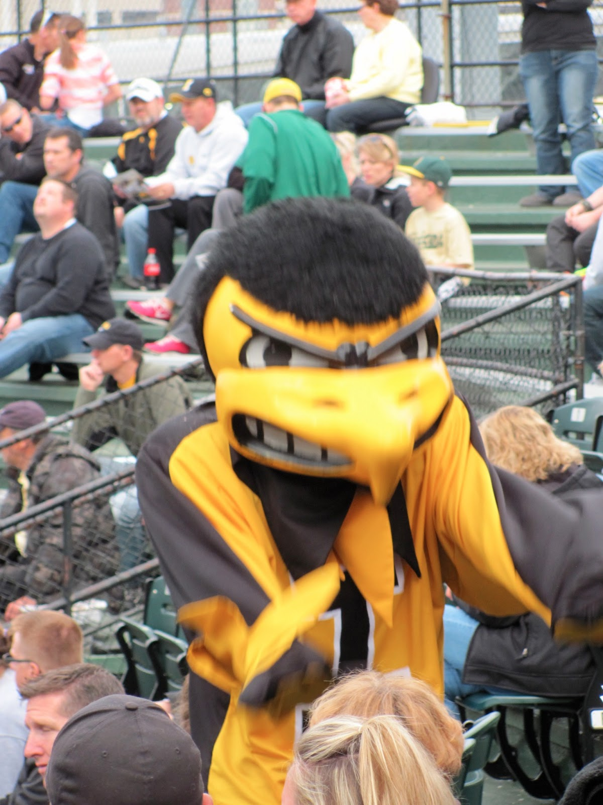 Iowa mascot Herky dances in the stands at the Iowa baseball game