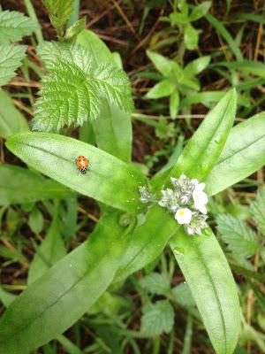 Ladybug, Redwood Regional Park Oakland, CA