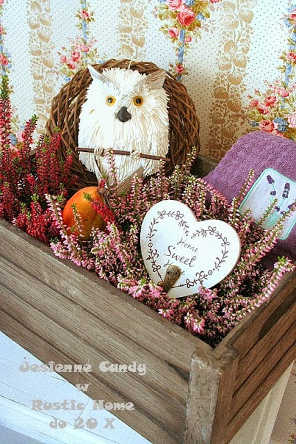 Candy w Rustic Home