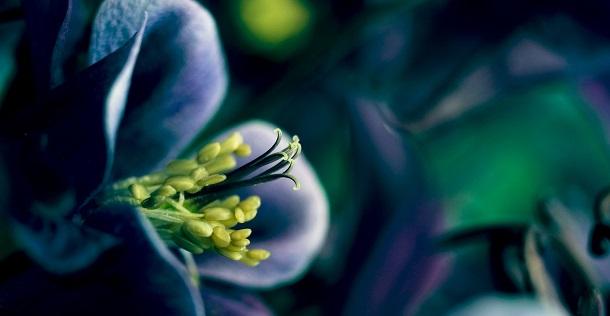 http://www.ciencia-online.net/2013/05/porque-se-fecham-as-flores-noite-com.html