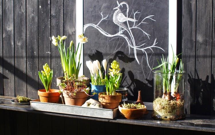 Brug massevis af forårsbebudere til at skabe forår i haven i februar