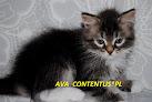 AVA Contentus*PL