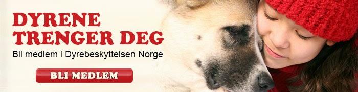 https://medlem.dyrebeskyttelsen.no/portal/page/portal/dn/bli_medlem