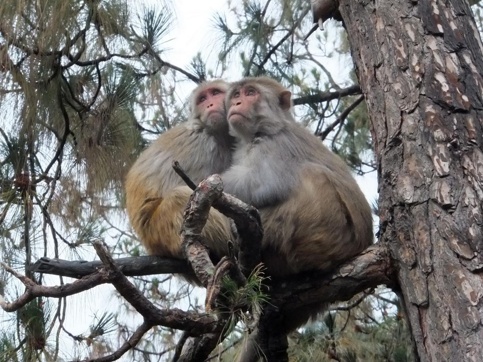 обезьяны готовятся ко сну