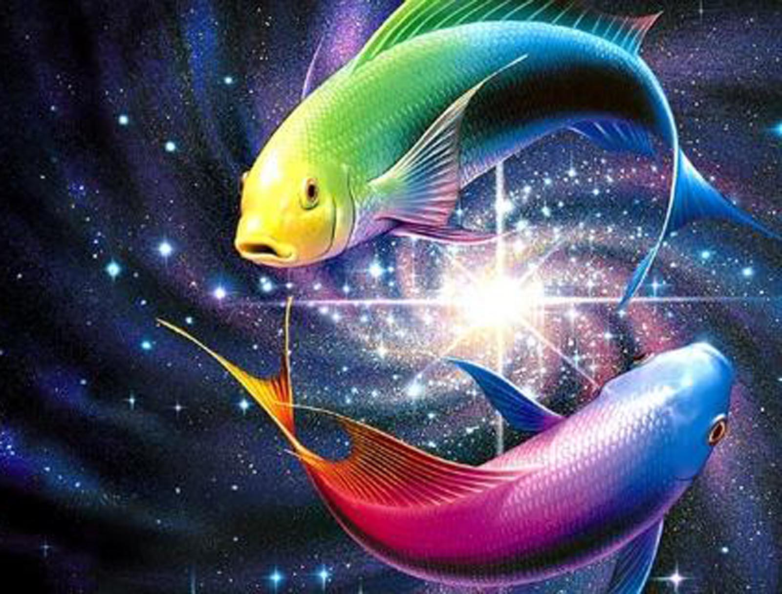 http://2.bp.blogspot.com/-o7DPjDe7Rmc/UCTUzy5go3I/AAAAAAAAEP0/xhTHkV-VIfA/s1600/Rainbow%2BFish%2BWallpaper%2B2.jpg