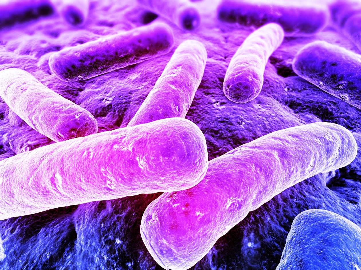 Bacterias, vistas por microscopio electrónico
