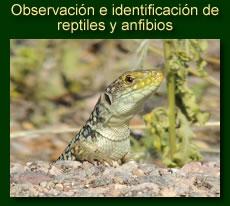 http://iberian-nature.blogspot.com.es/p/rutas-tematicas-observacion-de-anfibios.html