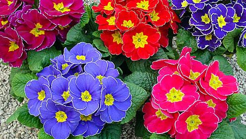 Per un mondo verde le piante fiorite for Piantine fiorite perenni