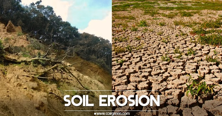 Coirgreen poor quality soil can lead for Quality topsoil