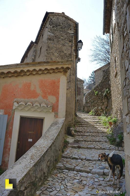 un chien dans les escaliers de Brantes photo pascal blachier au delà du cliché