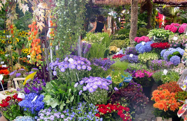 Spring Season In Holland Tips And Information Resources