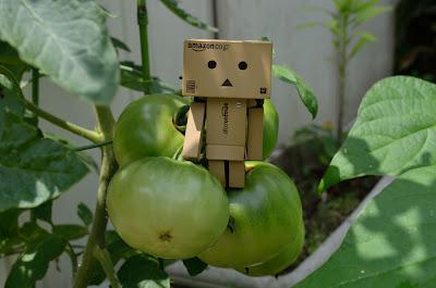 ダンボー 青いトマト 2