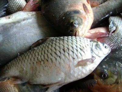ปลาที่นิยมนำมาทำปลาส้ม