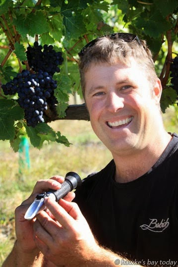 Tony Purdie, viticuturalist at Babich Vines, Gimblett Rd, Gimblett Gravels, Roy's Hill, Hastings, using a refractometer to measure soluble sugars in the juice of these cabernet sauvignon grapes, destined for the Irongate Patriarch wine. photograph