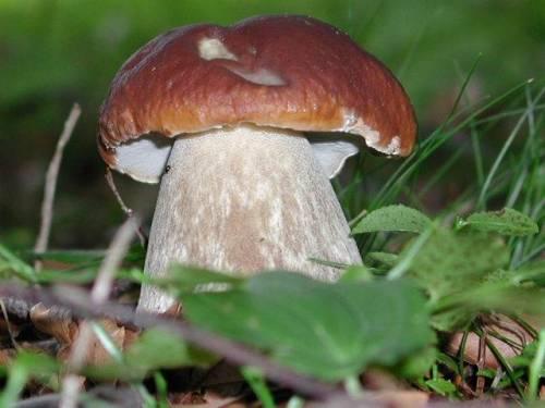 Mezzi da funghi di piede