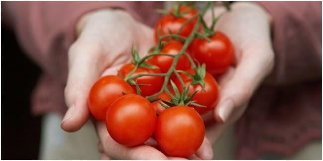 Berita Banten - Tomat Bisa Bikin Suami Lebih Subur Dan Greng