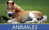 Descubra nuestra enorme colección de fotografías sobre diversos animales de nuestro planeta como son; Osos, Leones, Tigres, Gatos, Perros, Caballos, Vacas, Leopardos, Etc.