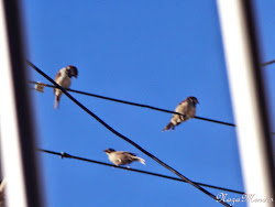 Pássaros!!! Liberdade, Amizade!!!