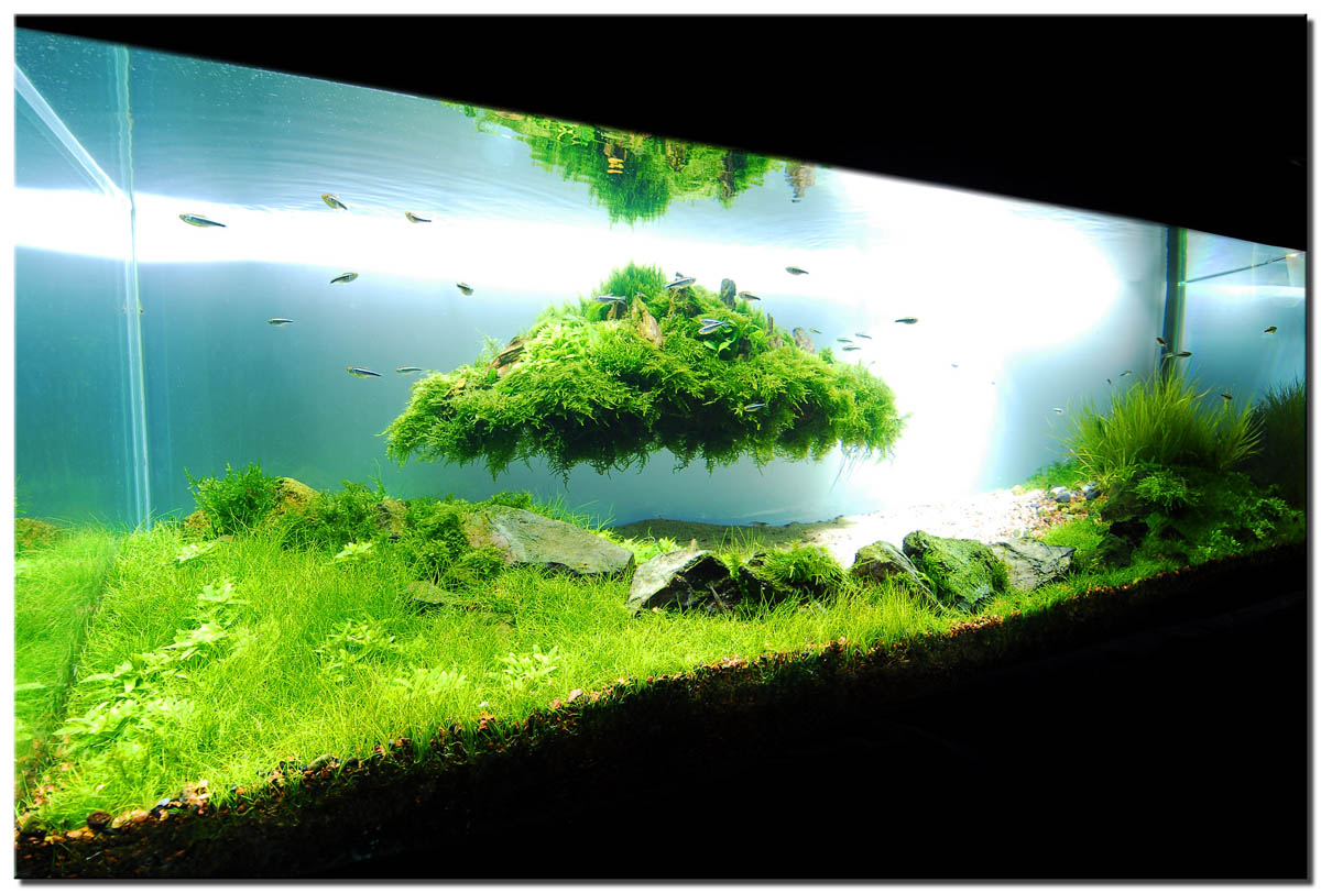Aquascape indonesia for Green water in fish tank