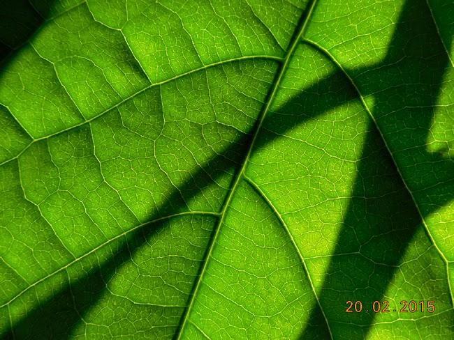 Umbra verde