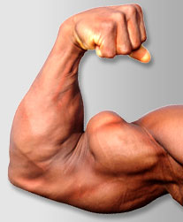 biceps, muscle, biceps curl, biceps muscle, biceps exercises