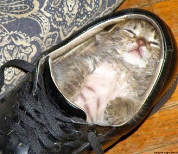 Photo chaton dans un chaussure