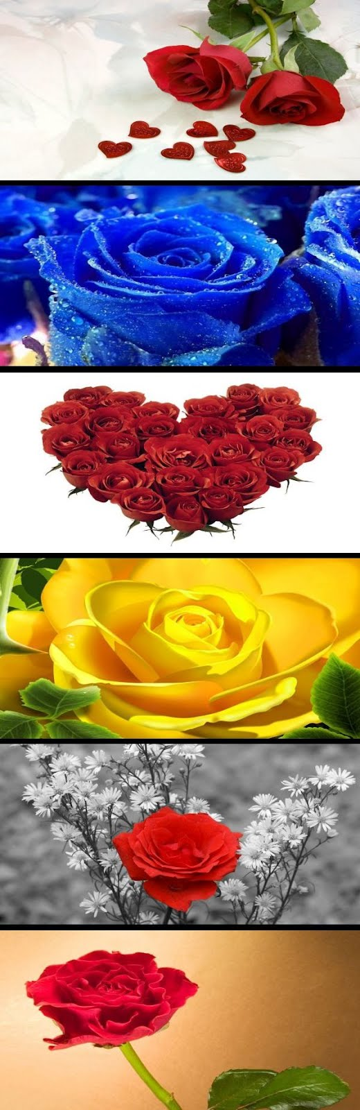 50 Free Roses Flowers Backgrounds Wallpapers Download