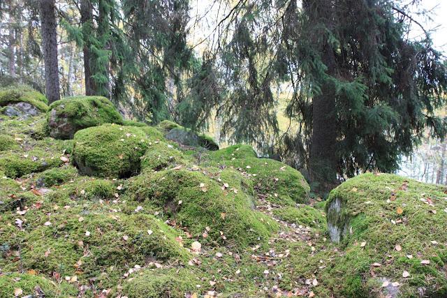 urskog, mossa skogsbryn trädgård natur woodland bloggtips